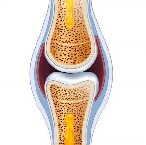 hoe zit kraakbeen in elkaar