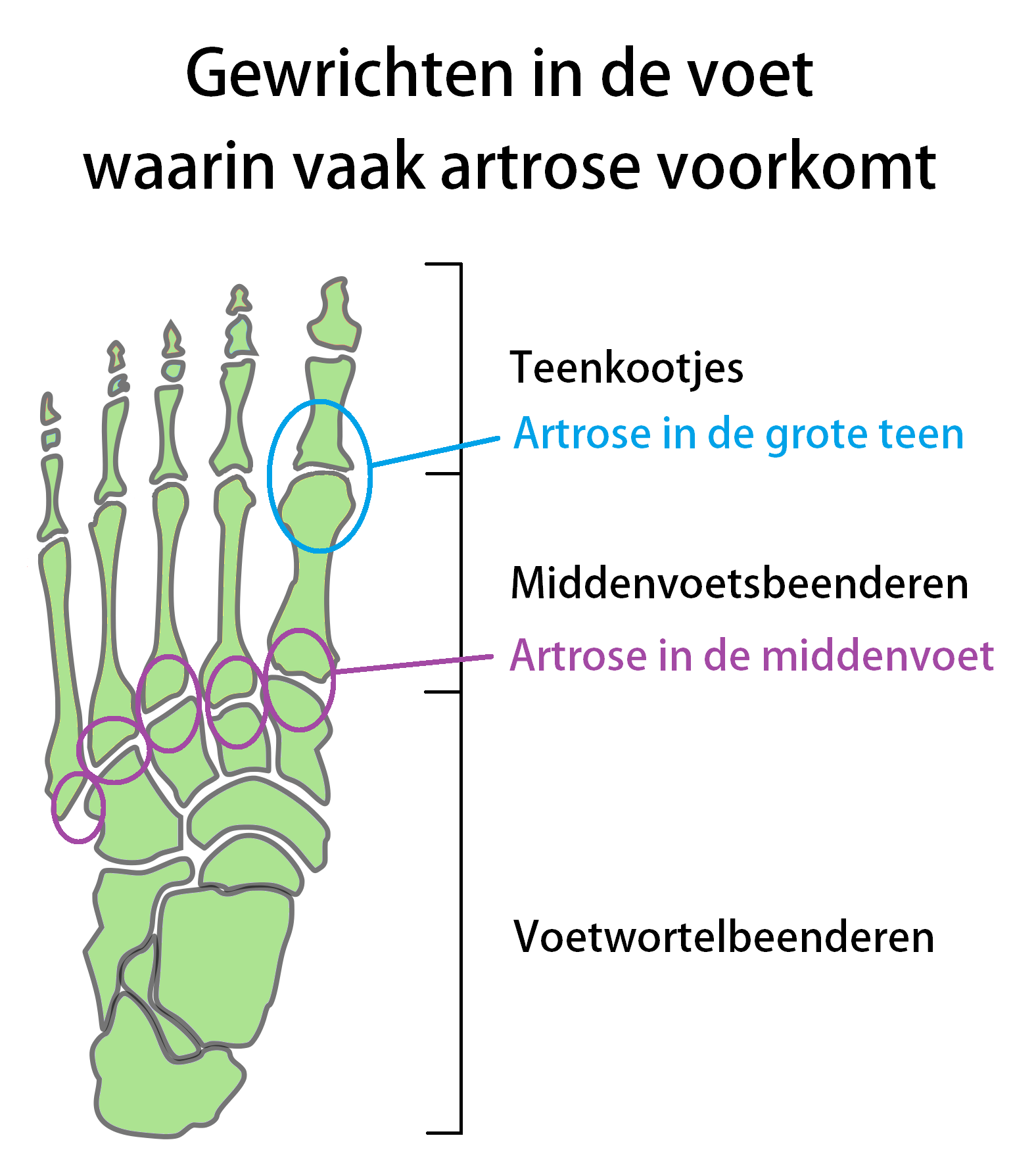 Teenager Anatomie 78