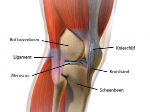 Overzicht van het complexe kniegewricht.