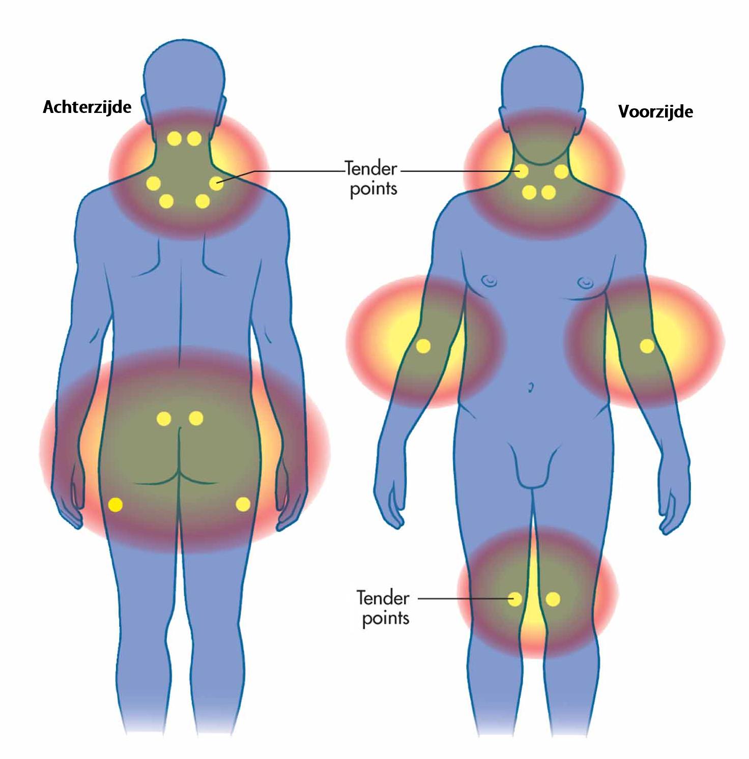 spieren rug