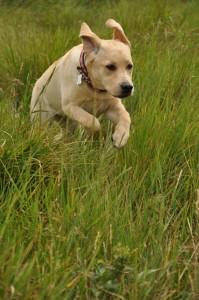 hond artrose groenlipmossel