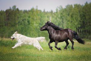 groenlipmossel kat hond paard