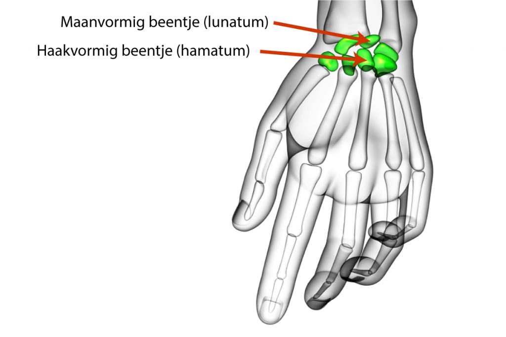 kienbock-pols-anatomie-pijn