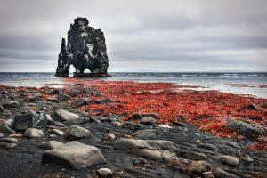rode-alg-ijsland-calcium