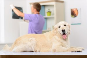 artritis hond dierenarts