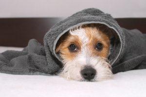 artritis hond koud