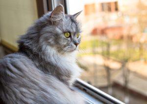 artritis katten vensterbank
