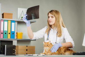 katten artritis dierenarts