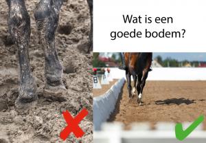 goede bodem voor paard artrose
