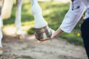 buigproef paard pees