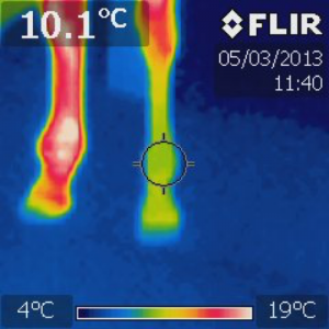 thermografie peesblessure paard