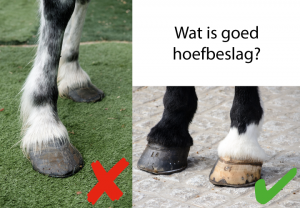 goed hoefbeslag paard artrose