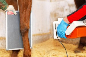 radiografie paard artrose