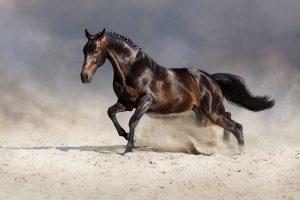 Gewrichtsproblemen bij paarden