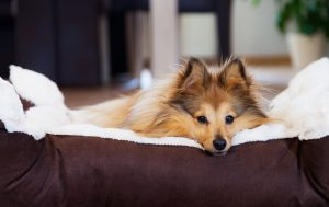 Beter slapen met hond naast je bed