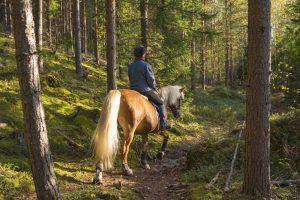 Een mens is niet gemaakt om op een paard te zitten
