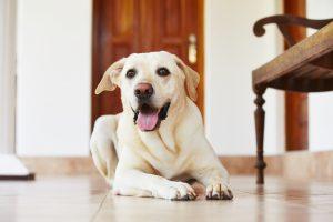 Hond gewrichtspijn huis