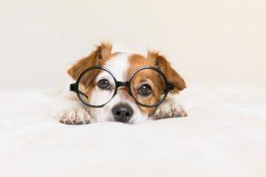 Hond slim