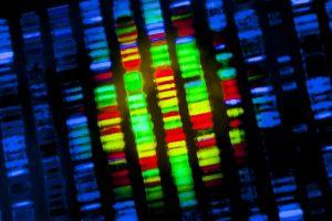 genen artrose