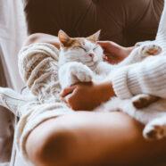 Aai je kat om stress te verminderen