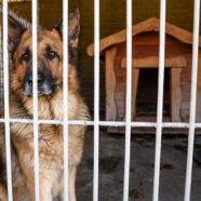 Coronahonden moeten twee dagen wennen aan asiel