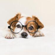 Uw hond is waarschijnlijk dommer dan u denkt
