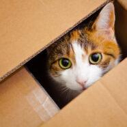 Waarom zijn katten dol op dozen?