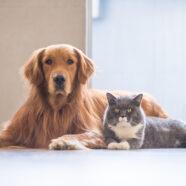 Zo worden uw kat en hond de dikste vrienden