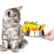 Kan ik van mijn kat een vegetariër maken?