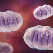 Verband ontdekt tussen mitochondriale schade en osteoporose