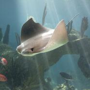 Vissen kunnen sleutel zijn tot stamceltherapie bij mensen