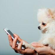 Eerste fitnesstracker voor honden in aantocht