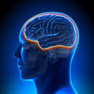 Minder verslavend opioïde vertraagt artrose en verlicht pijn