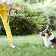 Straffen tijdens training brengt welzijn hond in gevaar